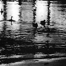 1981 - the night swim by moyo
