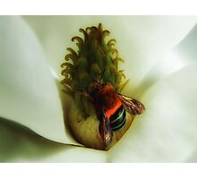 "'Magnolia & Bumble Bee"" Photographic Print"