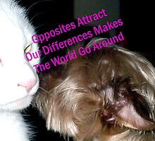Opposites Attract  by Charldia