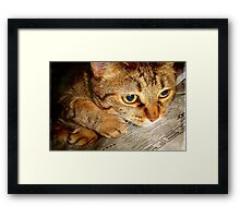 I can't believe I have to now work for tuna!!! © Framed Print