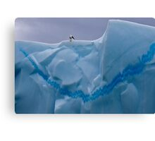 My Snazzy Iceberg (Kelp Gull, Pleneau Island, Antarctica) Canvas Print