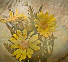Daisy by BoB Davis