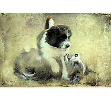 """""""& they call it Puppy Love ..."""" Photographic Print"""