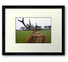 A Stag's Grace Framed Print