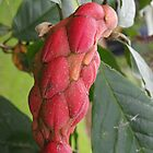 Custard apple bud by 3Cavaliers