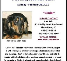 CINDER IS HOME!! by Ree  Reid