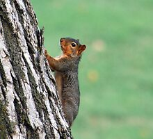 I feel kind of nutty! by Laura Davis