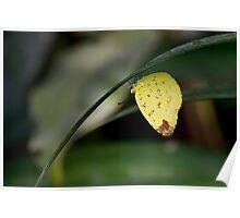 3-Spot Grass Yellow Poster
