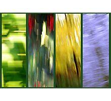 Whizz the four Seasons Photographic Print