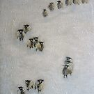 Counting Sheep, Swaledales on the Pennines. by Sue Nichol