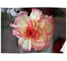 Pretty Carnation Poster
