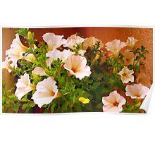 Delicate petunias in Spring  Poster