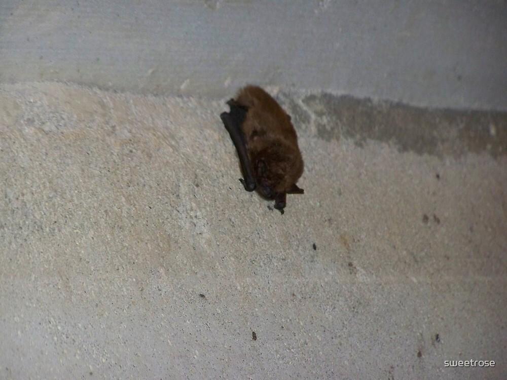 A little batty by sweetrose