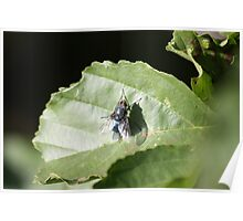 Fly on Leaf Poster
