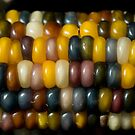 Indian Corn by Lisa Dugger
