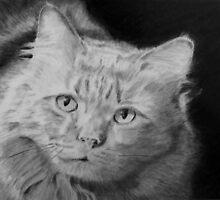 Our cat, Red by P. Leslie Aldridge