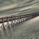Walnut Pier by Tim Mannle