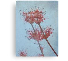 Maple Blossom Canvas Print