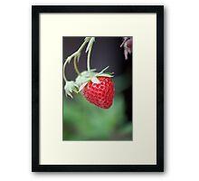 Juicy Strawberry Framed Print