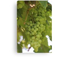 Plump and Juicy Canvas Print