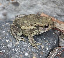Garden - Common Toad by squonk1666