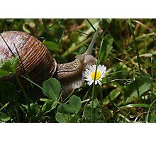 Vineyard Snail Photographic Print