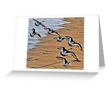 Oyster Catchers Greeting Card