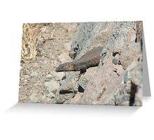 Canarian Lizard in Gran Canaria Greeting Card