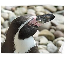 Penguin @ Paradise wildlife park Poster