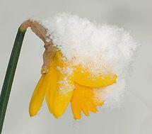 WINTER OR SPRING by RoseMarie747