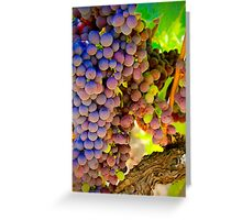 Light in the Vineyard Greeting Card