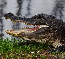 Gator by Savannah Gibbs
