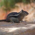 Chipmunk by SHickman