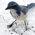 BIRDS ENJOYING THE NEW SNOW by RoseMarie747