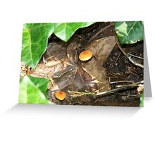 Tiny Fungus Among Us Greeting Card