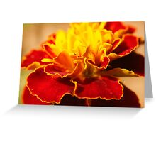 macro marigold Greeting Card