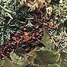 Herbs For Tea by Mystikka