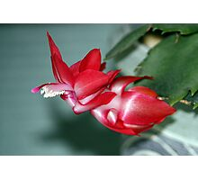Easter Cactus Photographic Print