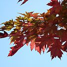 Autumn Glow II by Natalie Cooper