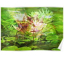 Choir of Water Lilies Poster