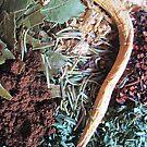 Herbs For Tea 2 by Mystikka