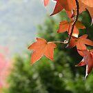 Autumn Glow III by Natalie Cooper