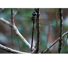 Forest dragonfly Photographic Print