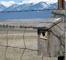 Wild Birdhouse by Nichelle Jones