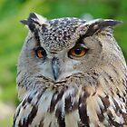 I'm watching YOU! by Svetlana Day