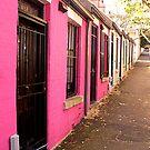 Paddington Pink. by Lynne Haselden