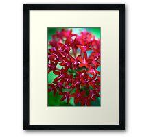 Scarlet Stars Framed Print