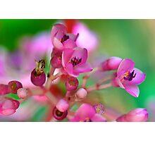 Floral Symphony Photographic Print