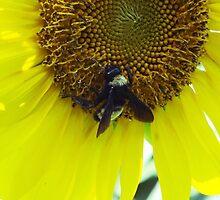 The Busy Bee by Heather Porfiriadis