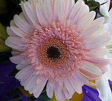 Morning Blush by DEB CAMERON